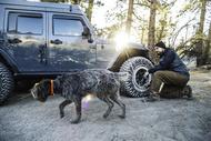 Auto Edito km3 jeep dog max Tyres